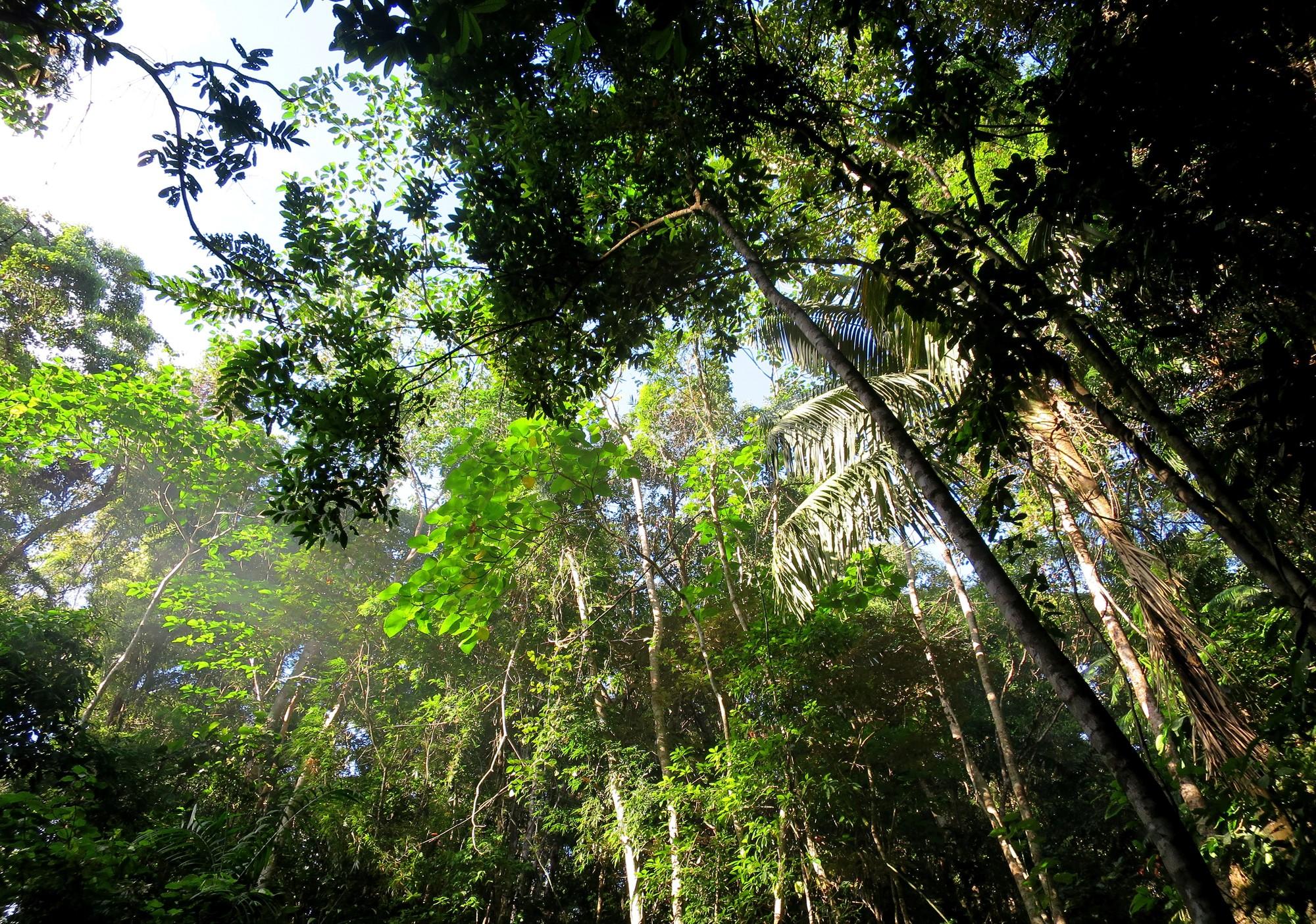 Aux Philippines, tous les étudiants doivent planter 10 arbres avant leur diplôme