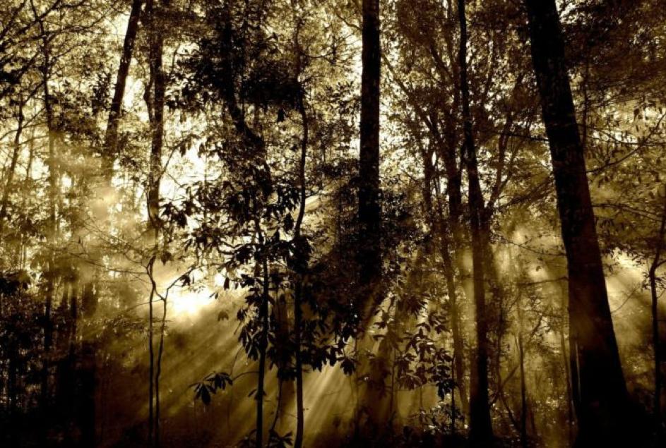 Quand la forêt reprend ses droits