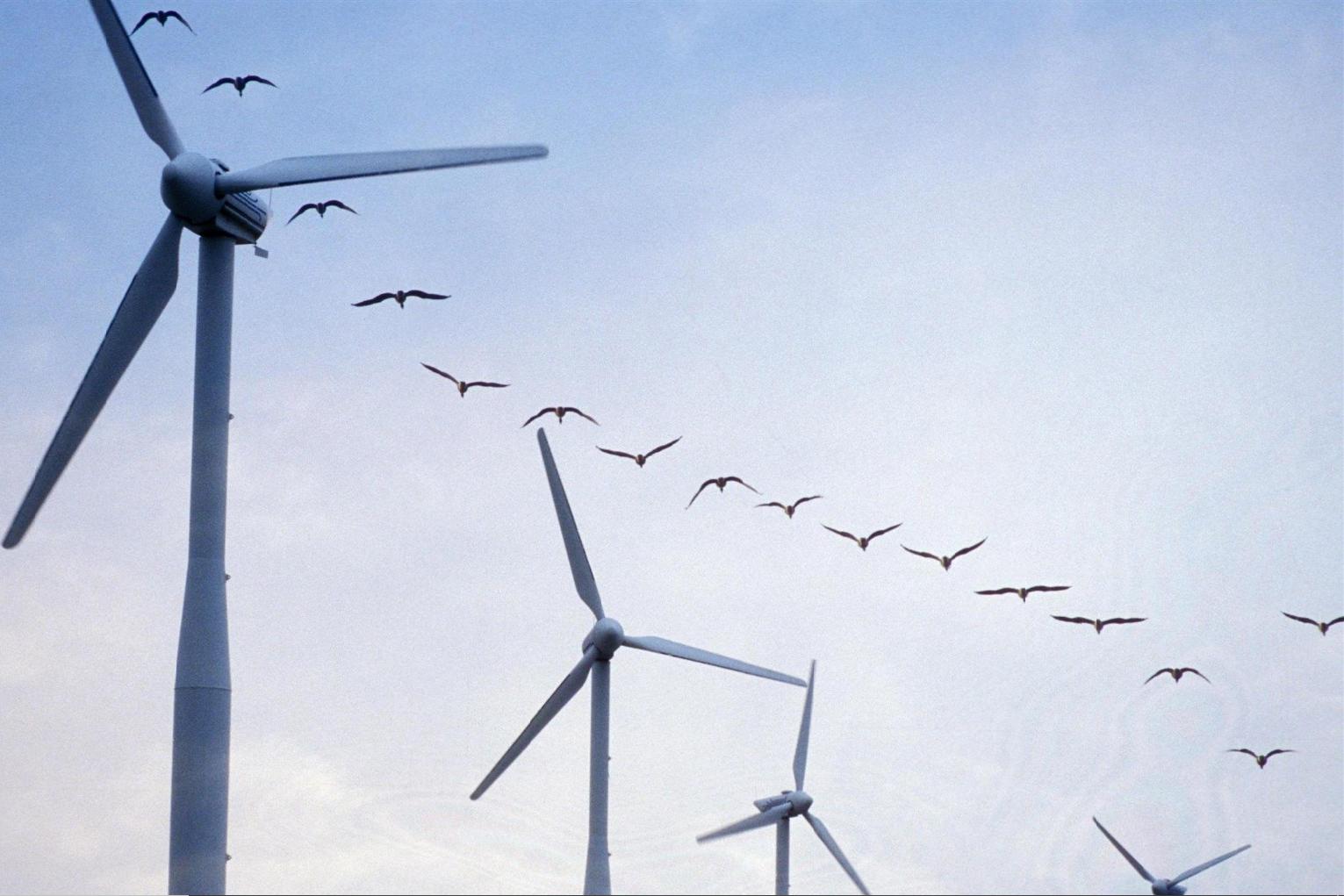Des éoliennes plus protectrices des oiseaux.