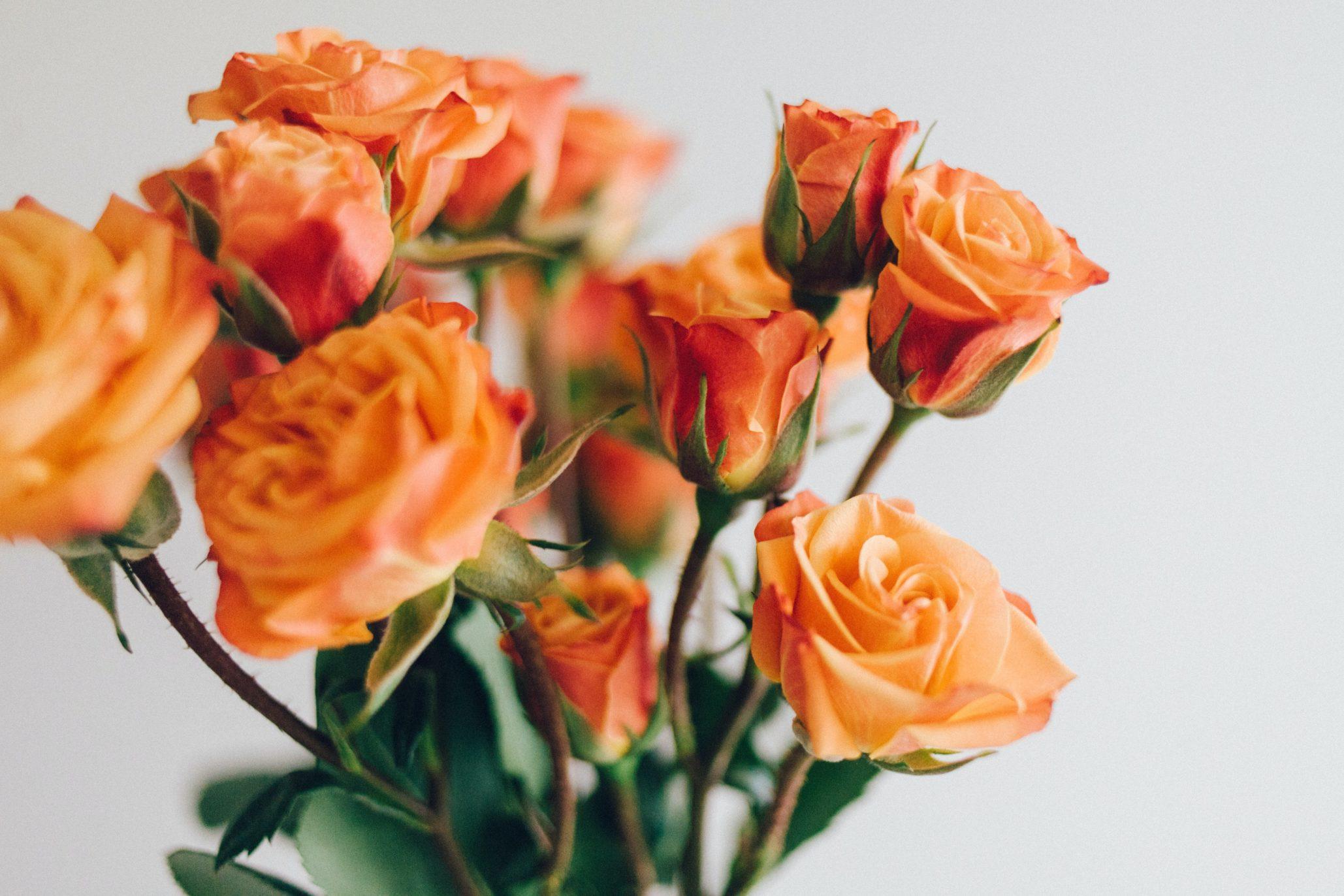 Faire fleurir l'espoir.
