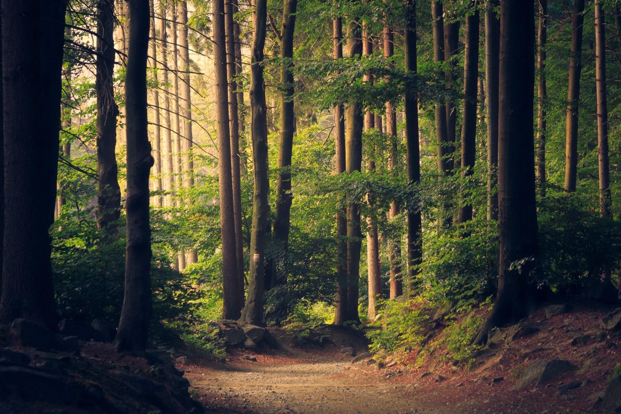 La France agit pour repeupler ses forêts.